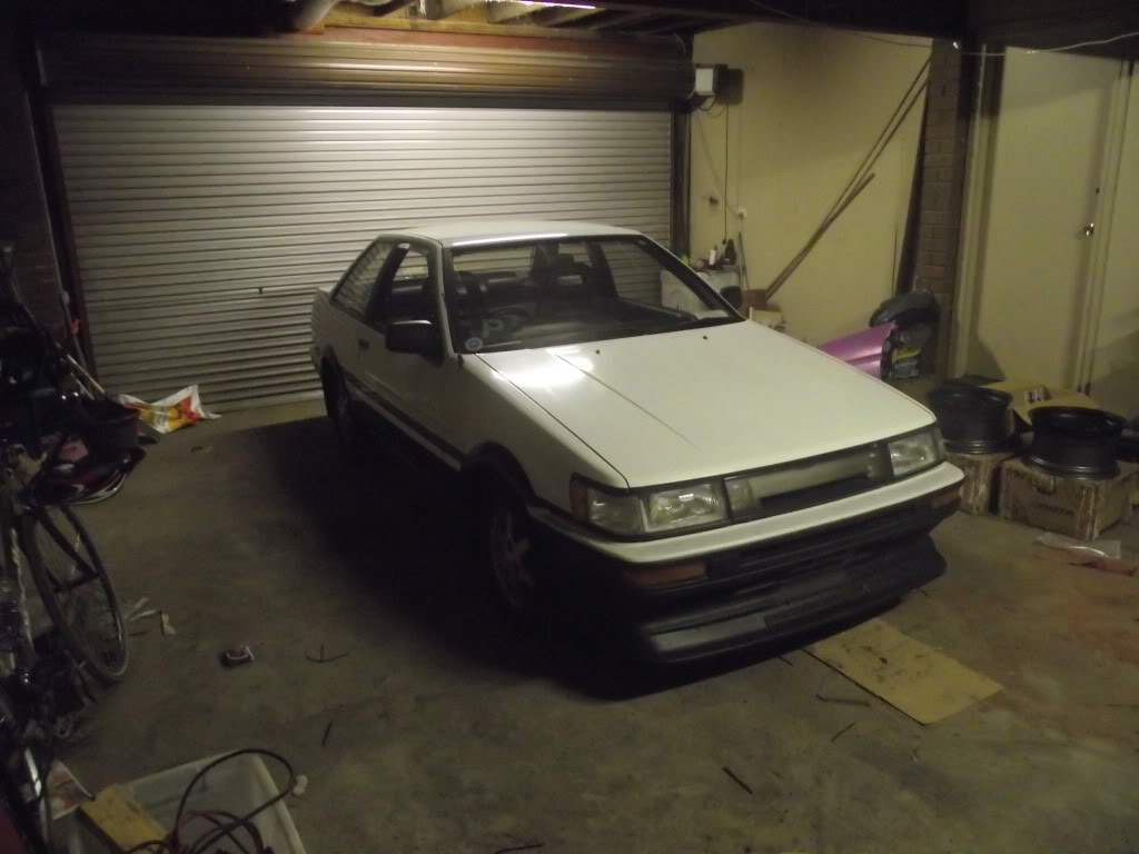 James' Panda Levin Notchy